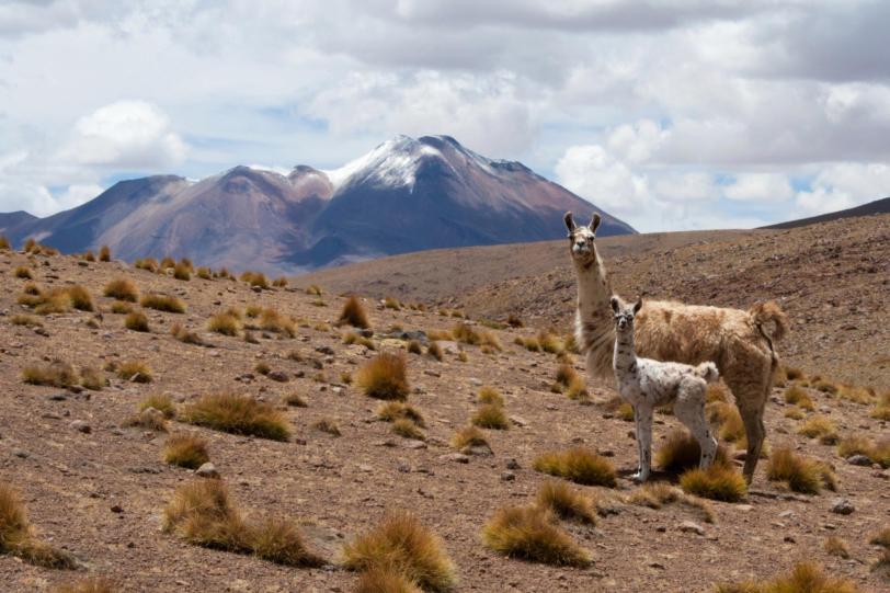 Llamitas - Foto di Huascar Fiorletta